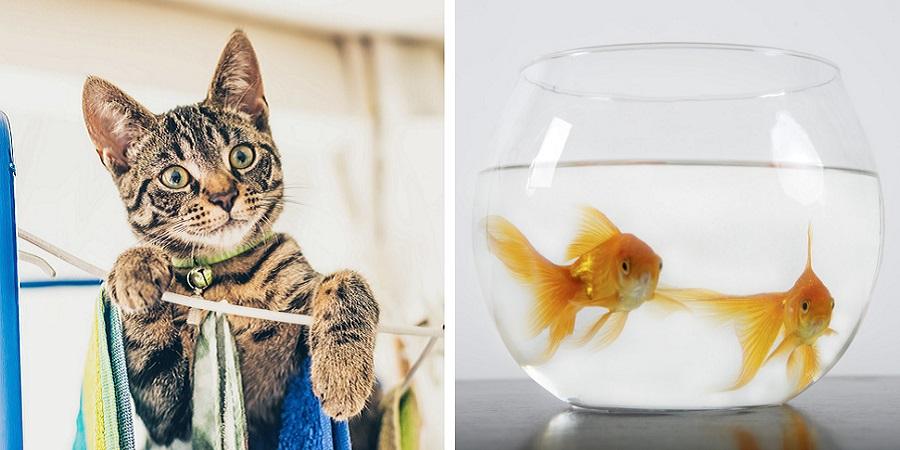 احترام به شهروندان بیزبان اما دوستداشتنی؛ با قوانین جالب کشورهای مختلف درباره حیوانات آشنا شوید
