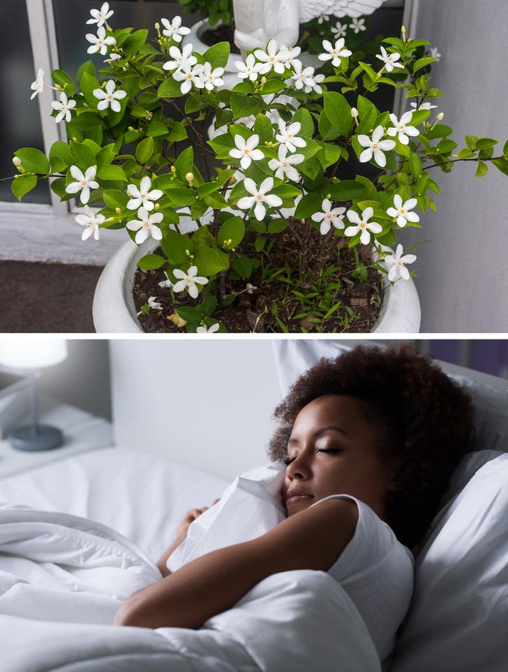 گیاهان آپارتمانی مفید برای سلامت
