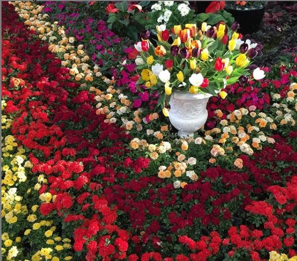 روزهای کرونایی «خرید گل»: از افت قیمت تا رکود در فروش گل