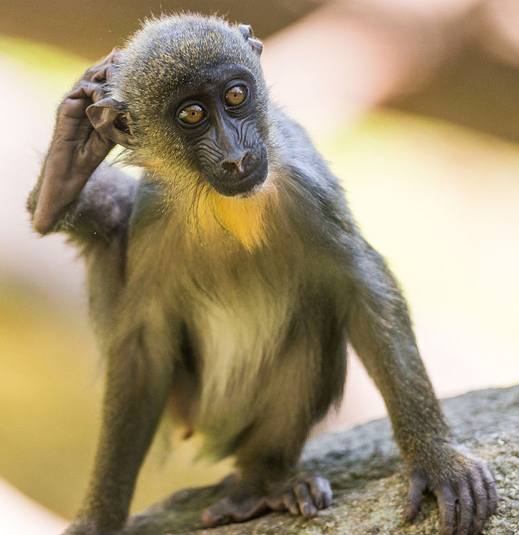 8 6 - سرگرمی دوران قرنطینه: حدس بزنید این کوچولوها بچه کدام حیوانات هستند؟