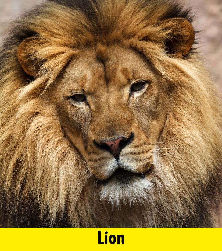 9 9 - سرگرمی دوران قرنطینه: حدس بزنید این کوچولوها بچه کدام حیوانات هستند؟