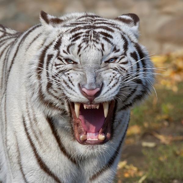 مرگبارترین حیوانات جهان