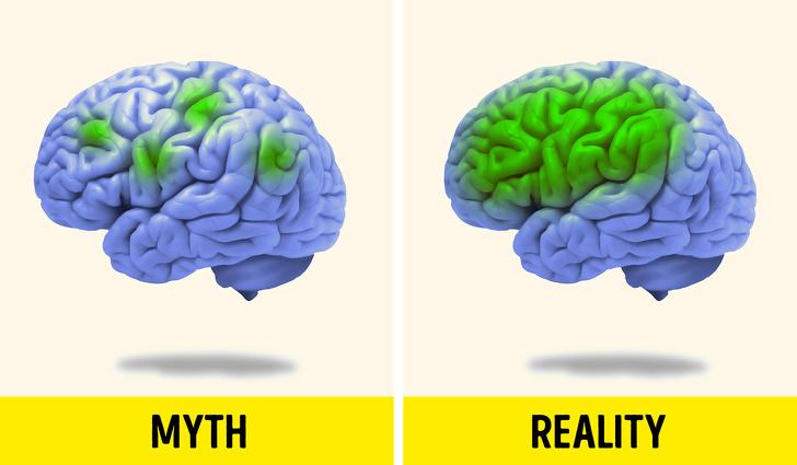 باورهای رایج اما غلط درباره مغز انسان