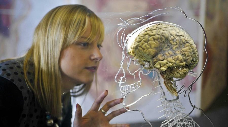 ۱۰ باور رایج درباره مغز انسان که اشتباه بودن آن ها ثابت شده