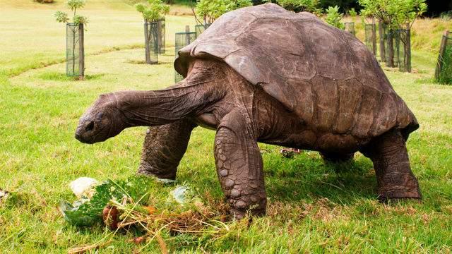 در ادامه می خواهیم داستان جاناتان لاک پشت را برای شما روایت کنیم که در جزیره سنت هلنا زندگی کرده و پیرترین حیوان زنده روی زمین لقب گرفته است.