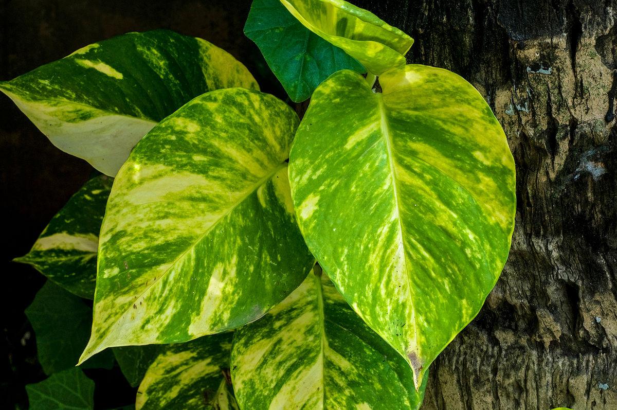 گیاهان آپارتمانی با تصویر
