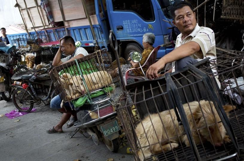 خوردن گوشت سگ در چین