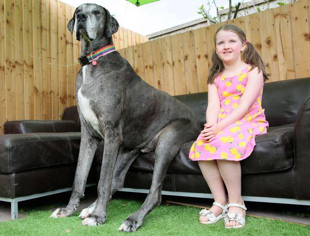رکورد جدید بزرگ ترین سگ دنیا