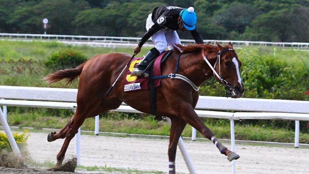 اسب Ocean Bay در ونزوئلا