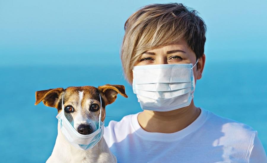 حیوانات خانگی می توانند ناقل ویروس کرونا باشند