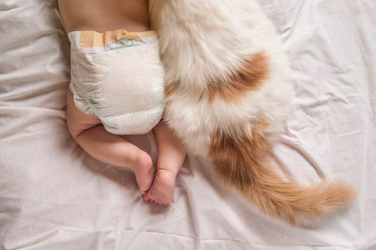 شرایط نگهداری از گربه