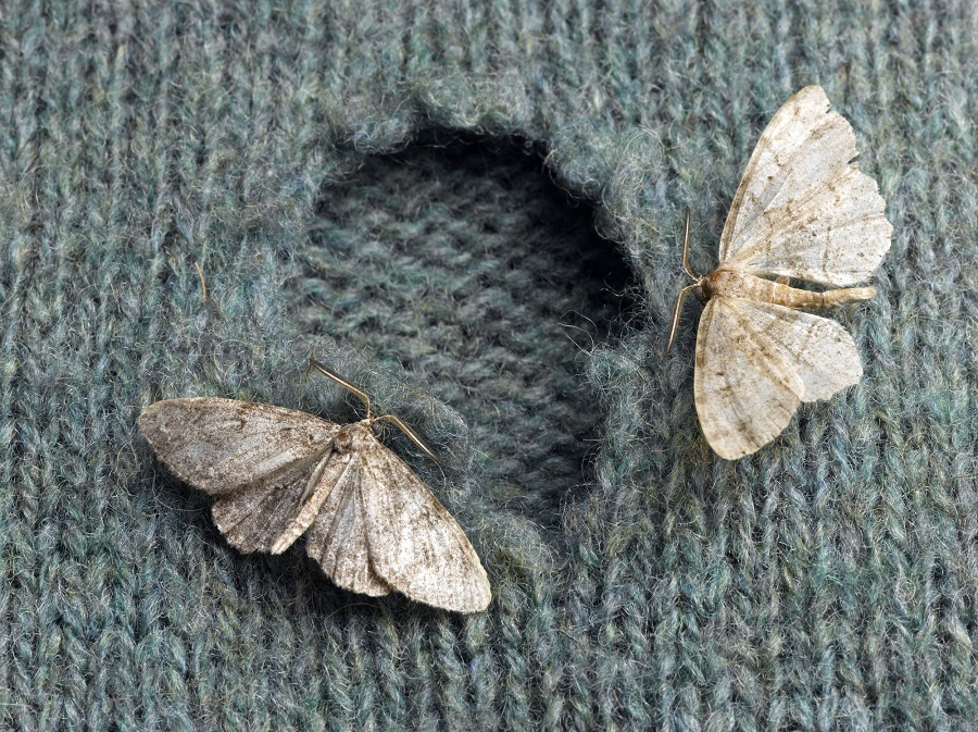 روش جلوگیری از بیدزدگی لباس ؛ با حشرات موذی در کمد لباسمان چه کنیم؟
