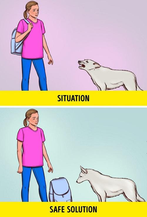 1 68e4fd5a758f7995df631086e1  روزیاتو: در مواجهه با سگ های ولگرد چطور جان خود را حفظ کنیم؟ اخبار IT