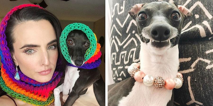 پنلوپه؛ سگی که به خاطر چهره خندهدارش ستاره اینستاگرام شده