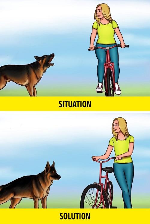 2 7d44775da88c7294e2a08e3285  - در مواجهه با سگ های ولگرد چطور جان خود را حفظ کنیم؟