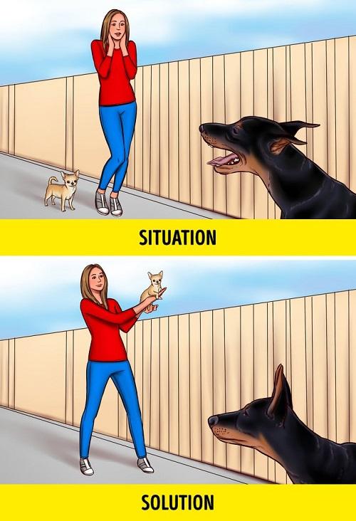 3 9e0f9050d9b5f24a6c77f86334  - در مواجهه با سگ های ولگرد چطور جان خود را حفظ کنیم؟