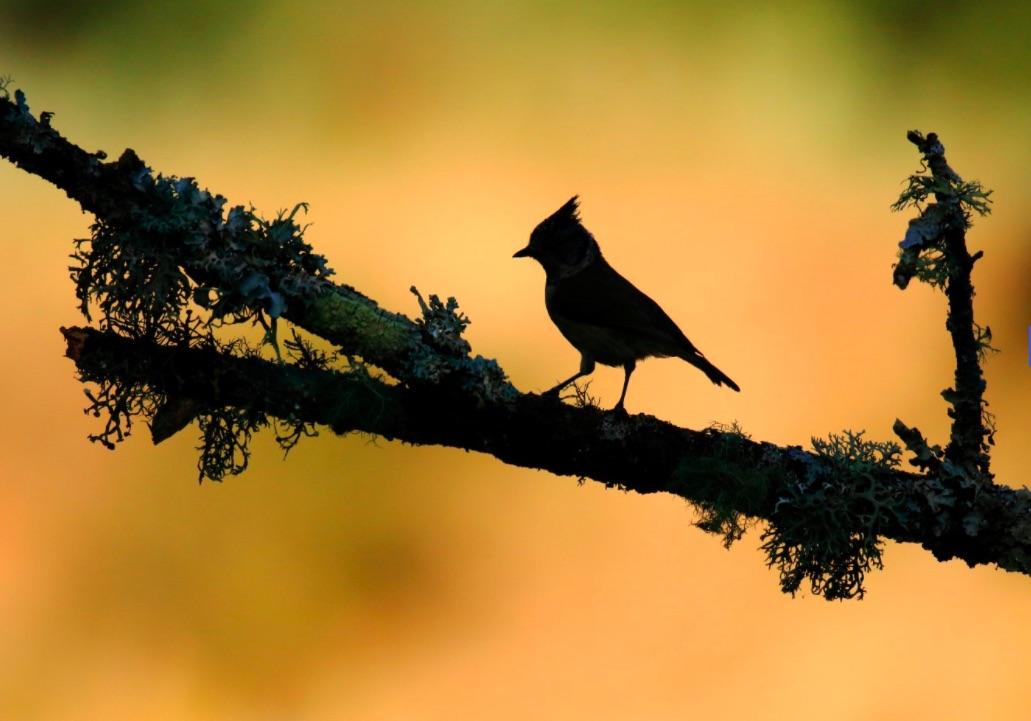 نگاهی به آثار برگزیده رقابت سالانه عکاسی از پرندگان ۲۰۲۰