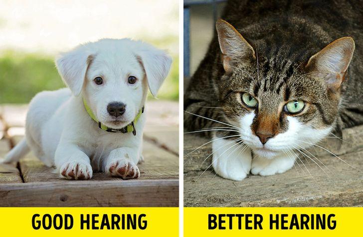 2 edc64b512a923673de4c4f8123 روزیاتو: چرا گربه ها یکباره به نقطه نامعلوم خیره می شوند؟ اخبار IT
