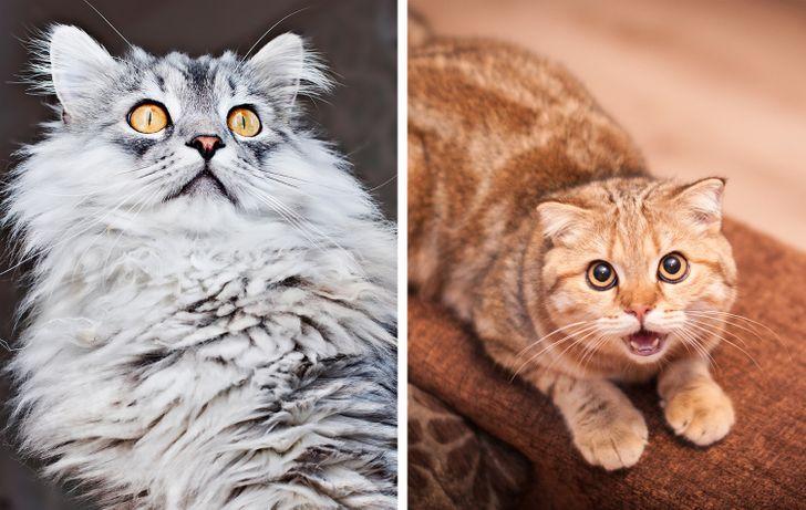 4 3b13c5574cac470886c4f2f109 روزیاتو: چرا گربه ها یکباره به نقطه نامعلوم خیره می شوند؟ اخبار IT