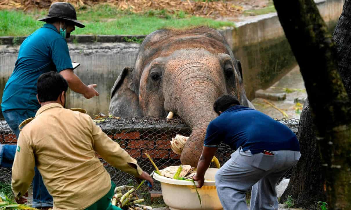 تنهاترین فیل دنیا