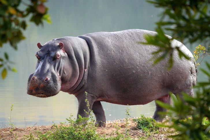 1 4037de570cad09ffbcd4d8a2df روزیاتو: حیواناتی که خیلی قبل تر از انسان روی کره زمین بوده اند اخبار IT