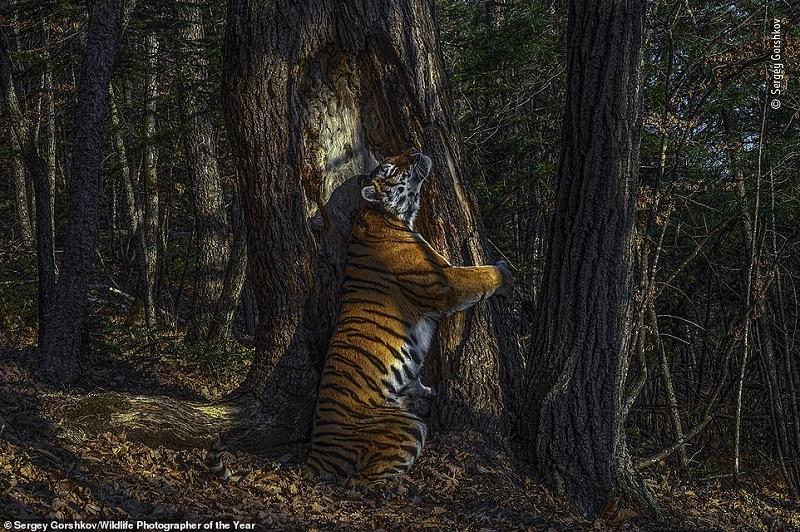مسابقه برترین عکاسان حیات وحش سال 2020