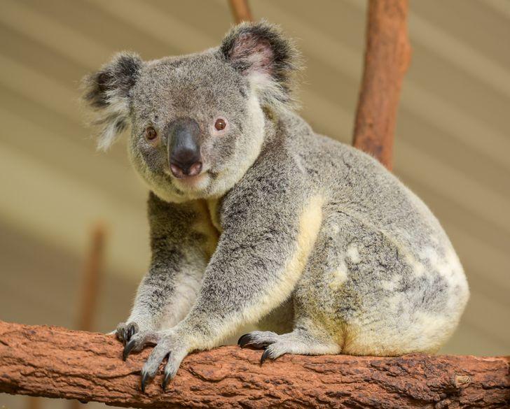 5 f445265579a4fe569bd06ebd1a روزیاتو: حیواناتی که خیلی قبل تر از انسان روی کره زمین بوده اند اخبار IT