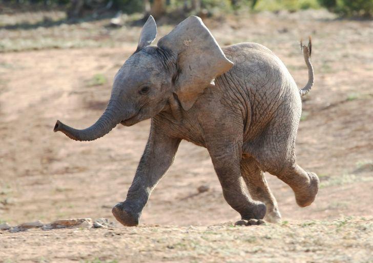 8 9c465f53918e0b91788e6a5588 روزیاتو: حیواناتی که خیلی قبل تر از انسان روی کره زمین بوده اند اخبار IT