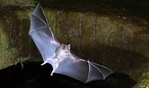 فاصله گذاری اجتماعی خفاش ها