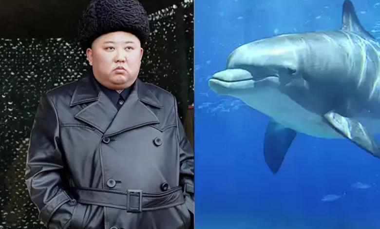 آموزش دلفین در کره شمالی برای حمله به غواصان دشمن و خنثی کردن مین های دریایی