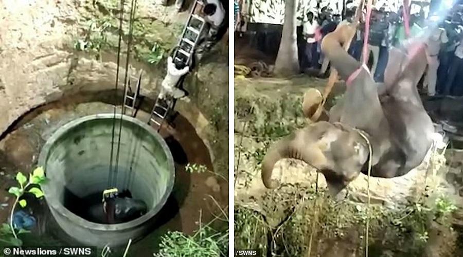 عملیات ۱۴ ساعته برای نجات یک فیل از چاه در هند + ویدئو