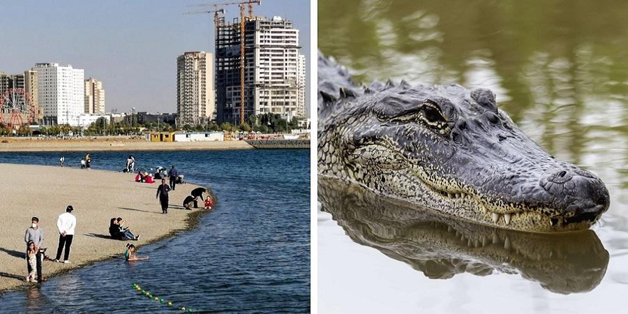 ماجرای جانور مرموز دریاچه چیتگر؛ تمساح، الیگیتور فیش یا اردک ماهی؟ + عکس