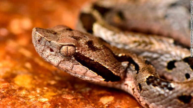 محققان بیش از 20 گونه جدید را در دره زونگو در کوه های آند بولیوی کشف کرده و تصاویری از آن ها را منتشر کرده اند که برای اولین بار دیده می شوند.