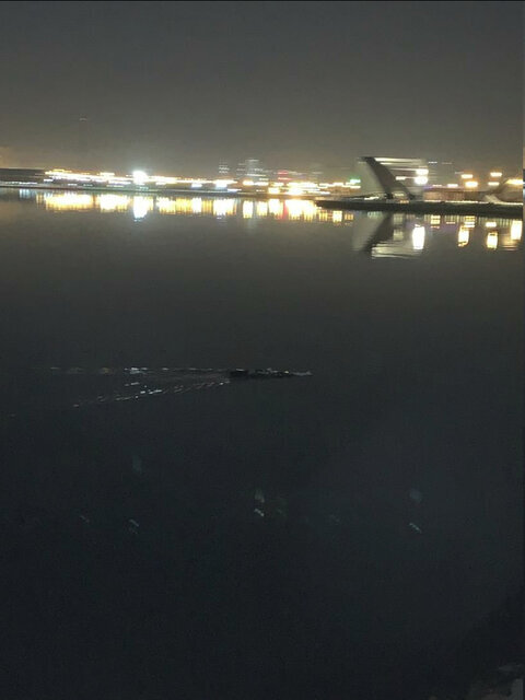 تمساح در دریاچه چیتگر الیگیتور فیش