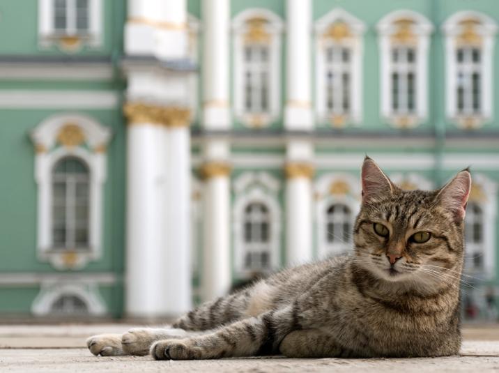 مرد فرانسوی بخشی از ثروتش را به گربههای موزه Hermitage در سنت پترزبورگ بخشید