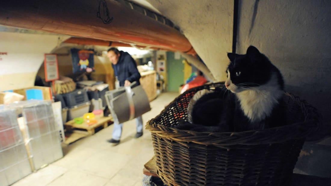 یک مرد نیکوکار فرانسوی  بخشی از ثروت خود را به گروهی از گربه ها که در زیرزمین موزه Hermitage  در سنت پترزبورگ روسیه زندگ می کنند بخشیده است.