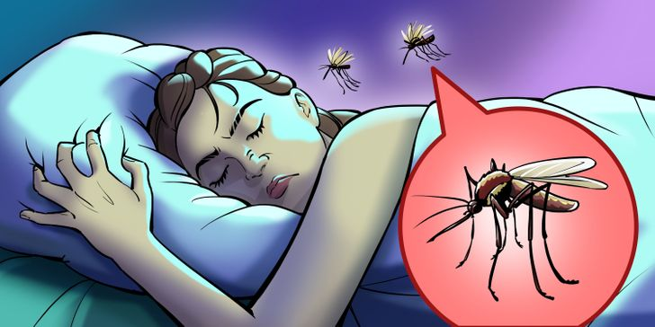 در حالی که تنها پشه های ماده از خون انسان تغذیه می کنند، هم پشه های نر و هم پشه های ماده می توانند صدا وز وز ناخوشایندی را تولید می کنند