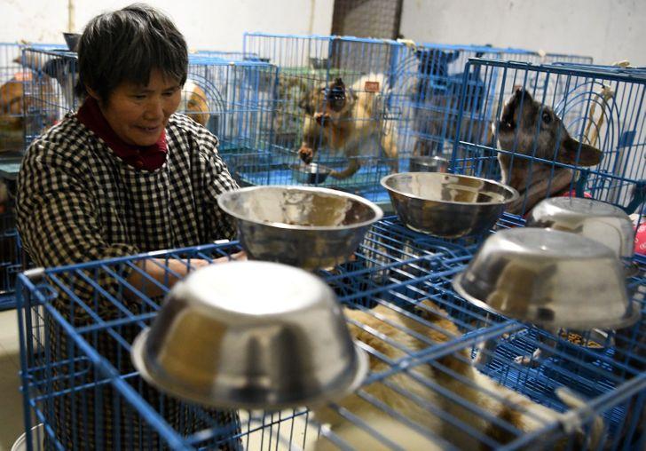 زنی به نام ون جون هونگ در چین است که عشق ورزیدن به حیوانات رها شده را وظیفه خود دانسته و اکنون مسئولیت نگهداری از هزاران حیوان خانگی را بر عهده دارد.