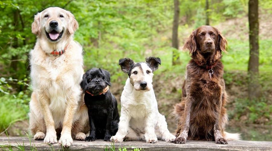 مدفوع سگ خانگی تان درباره سلامت آن چه می گوید؟