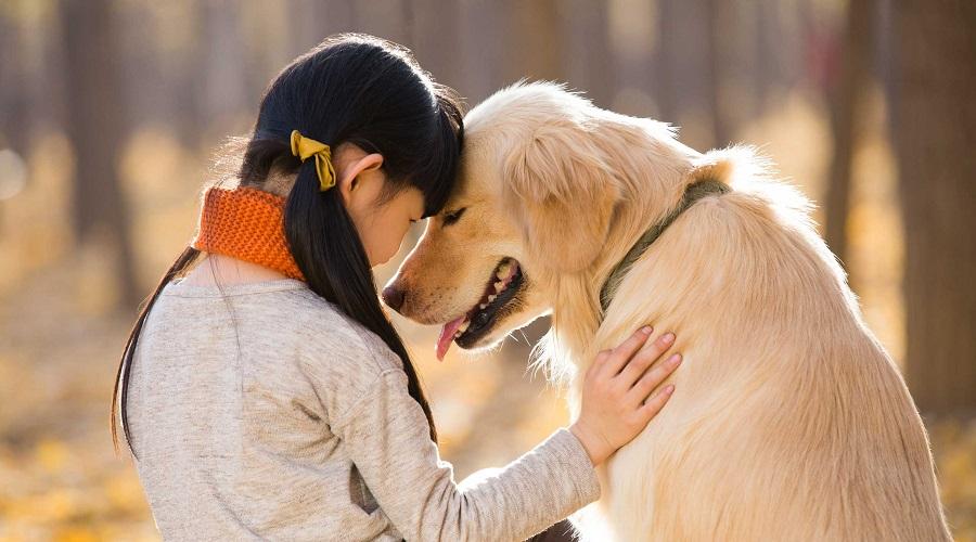 دانشمندان: انسان ها سگ ها را تصادفاً اهلی کردند