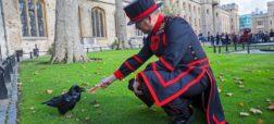 هراس از سقوط پادشاهی انگلیس به دنبال گم شدن یکی از کلاغ های برج لندن