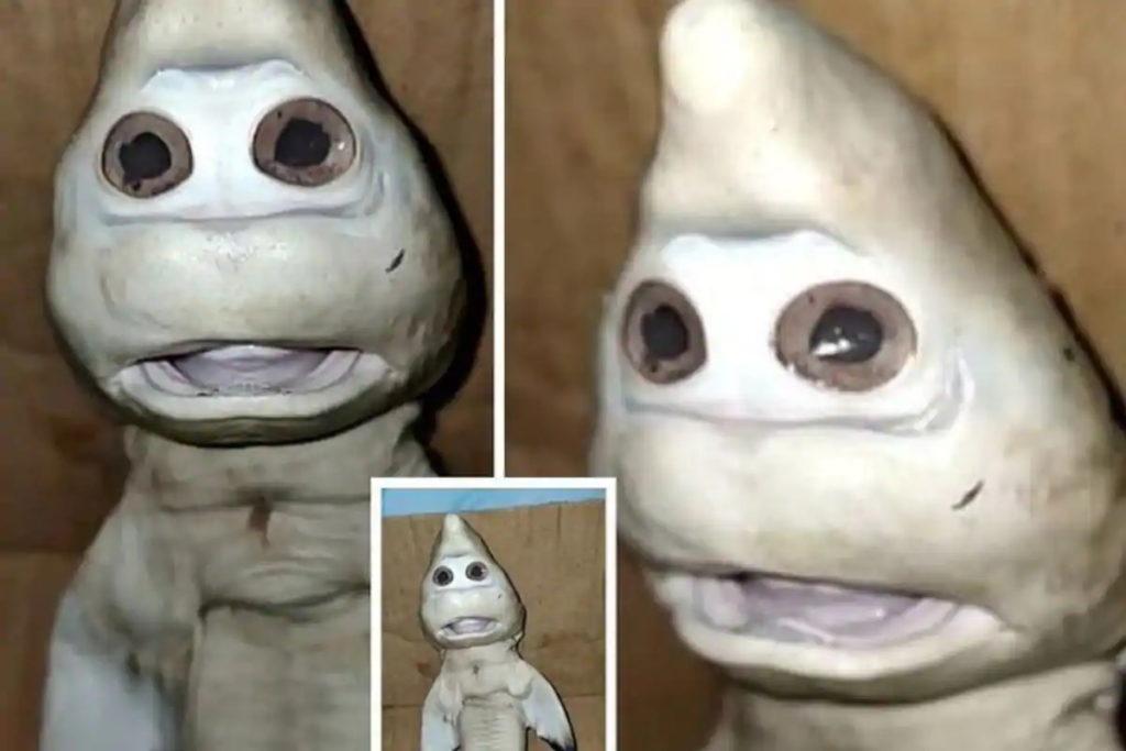 پیدا شدن یک بچه کوسه عجیب الخلقه در آب های اندونزی با ظاهری شبیه انسان