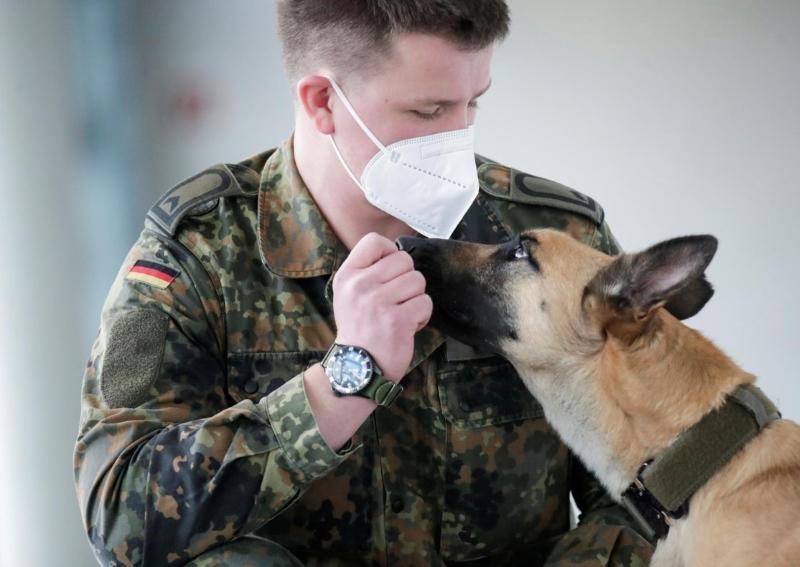 سگ های آموزش دیده آلمانی با ۹۴ درصد دقت بیماران مبتلا به کرونا را شناسایی می کنند