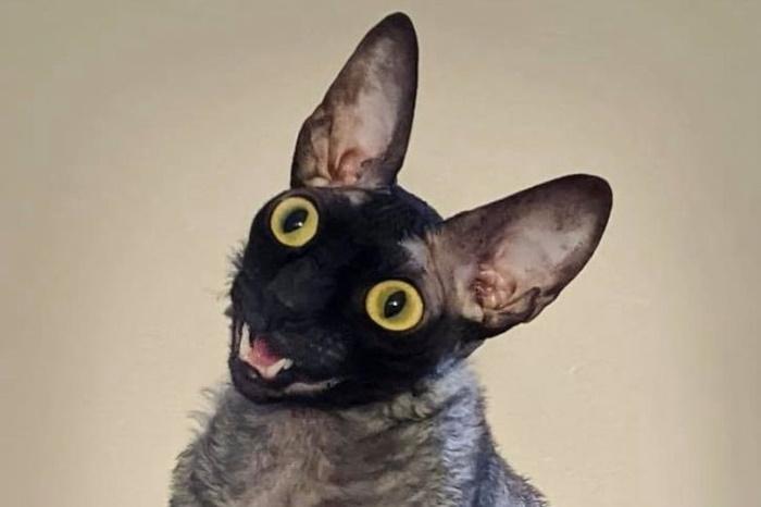 داستان «زشت ترین گربه تاریخ» که به باور بسیاری توسط شیطان تسخیر شده است