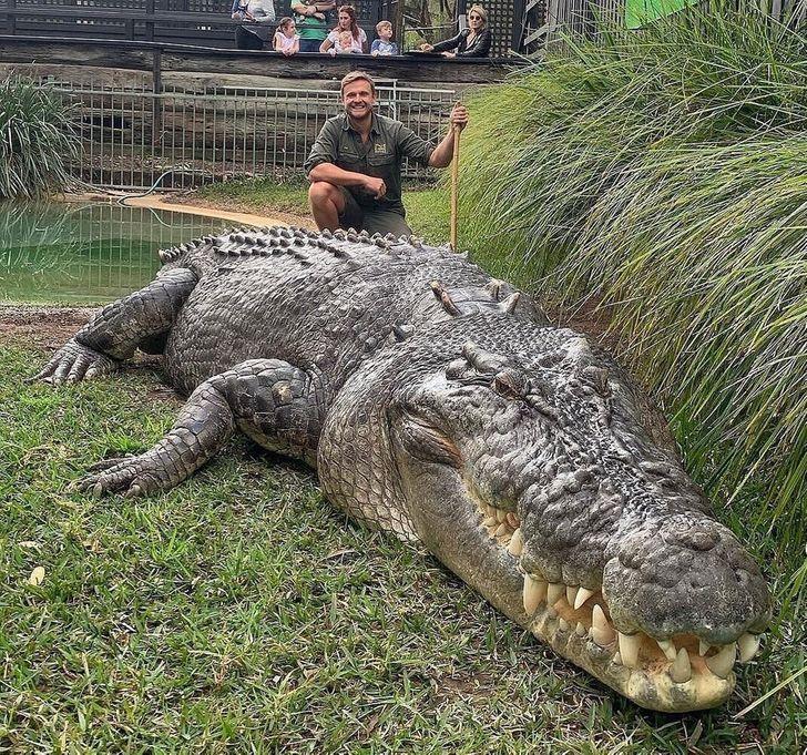 یکی از کروکدیل های پارک های طبیعی استرالیا