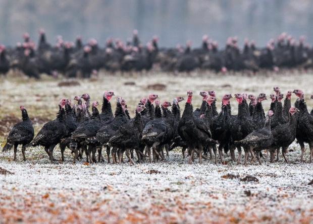 مقامات بهداشتی روسیه می گویند که اولین مورد ابتلای انسان به نوع جهش یافته ویروس آنفلوانزای مرغی در جهان را به ثبت رسانده اند.