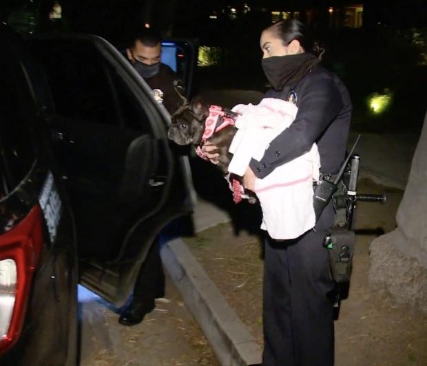 لیدی گاگا برای یافتن سگ های کمیاب خود که توس دو سارق مسلح به سرقت رفته اند 500,000 دلار جایزه تعیین کرده است.