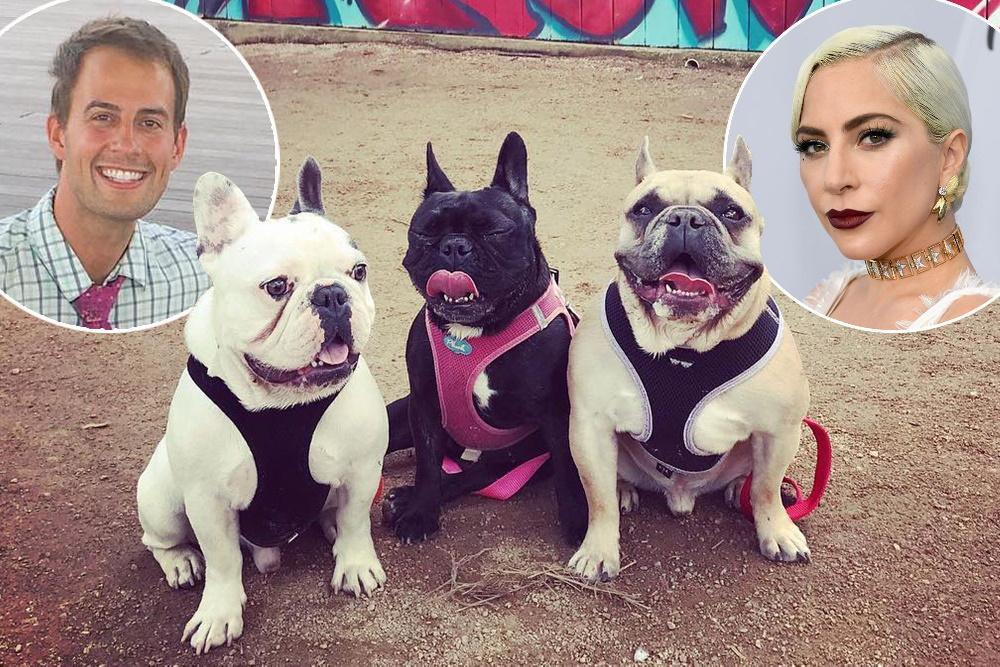 دزدیده شدن سگ های کمیاب لیدی گاگا و اعلام جایزه ۵۰۰،۰۰۰ دلاری برای یابنده