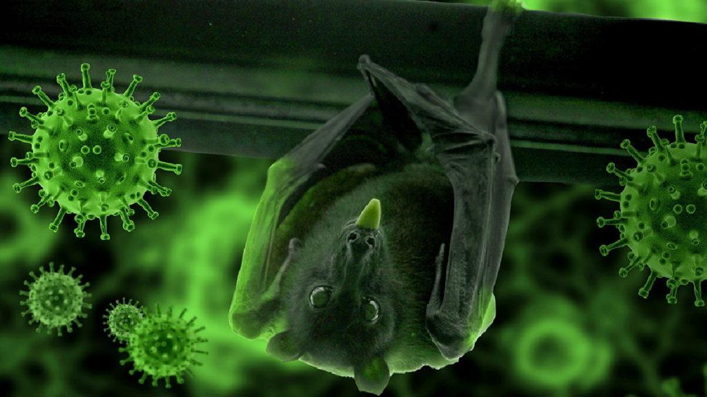 کشف ویروس خفاشی جدیدی در چین که ۹۴.۵ درصد شبیه ویروس کووید-۱۹ است