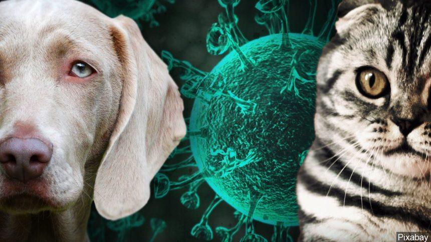 اولین واکسن کرونای حیوانی در روسیه با اثرگذاری ۱۰۰ درصدی بر ویروس آزمایش شد